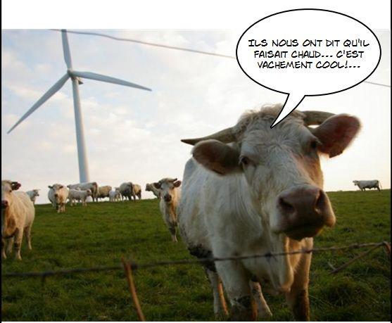 02 septembre 2012 la vidure - Photo de vache drole ...