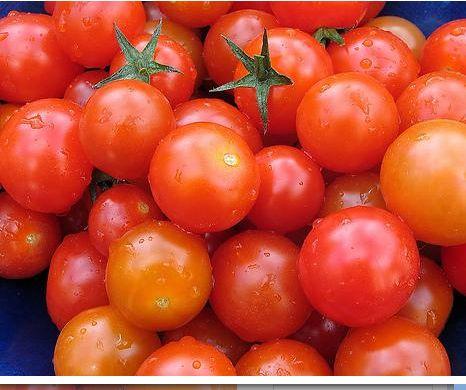 Les tomates sans tiges la vidure - Quand planter les tomates cerises ...