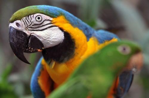 BRAZIL-ANIMALS-TRAFFICKING