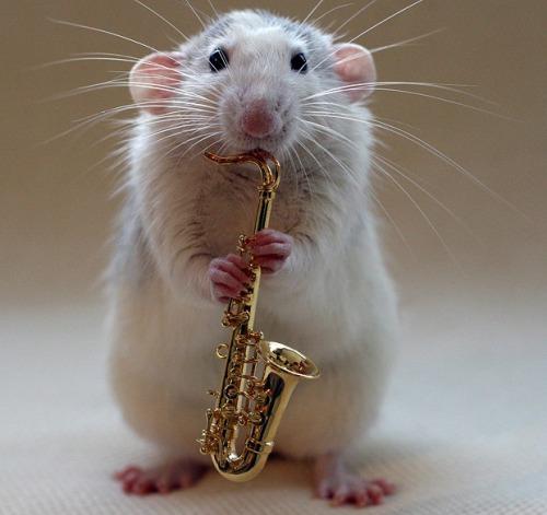 rat sax
