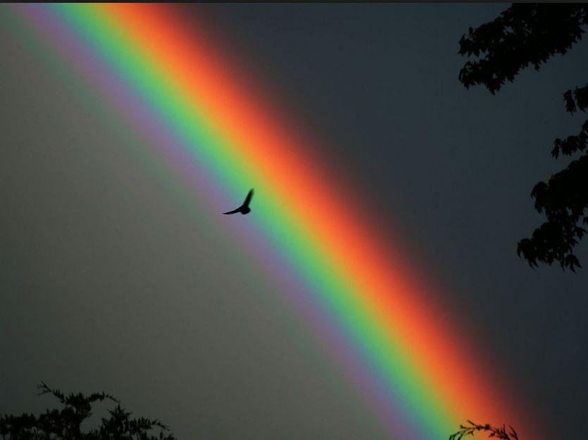 Salut à tous les rayés Arc-en-ciel