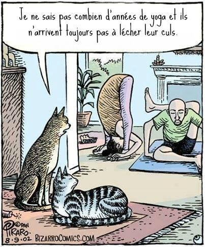 chats et yoga