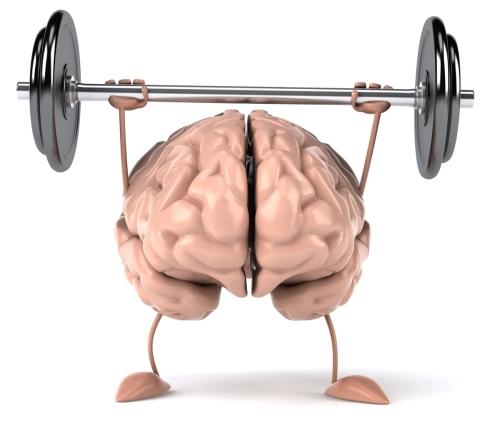 cerveau sportif