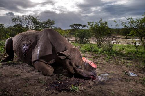 3-074_brent-stirton_getty-images_national-geographic-magazine